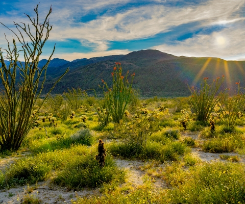 Anza Borrego Sunset in Spring Web